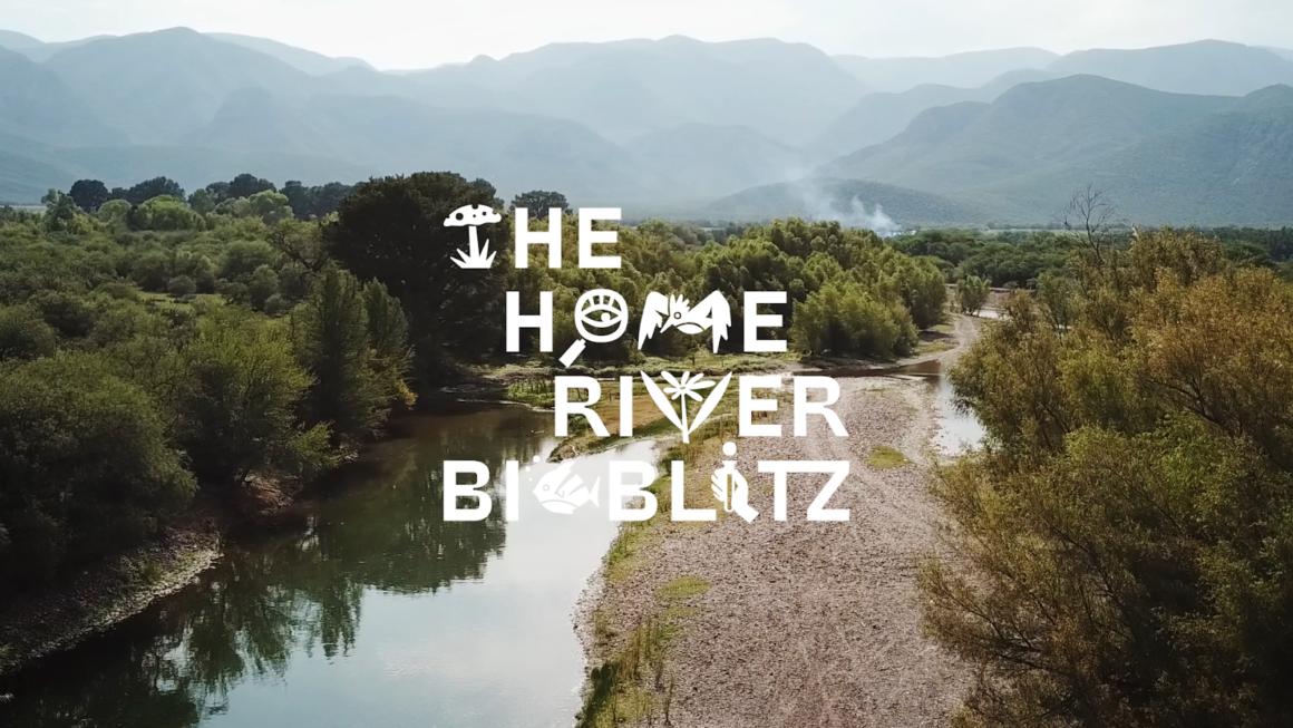 The Home River Bioblitz 2020
