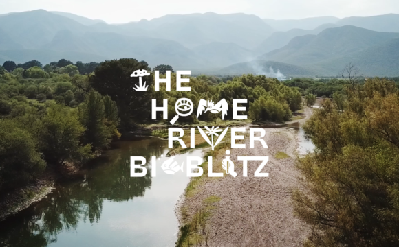 The Home River Bioblitz 2020